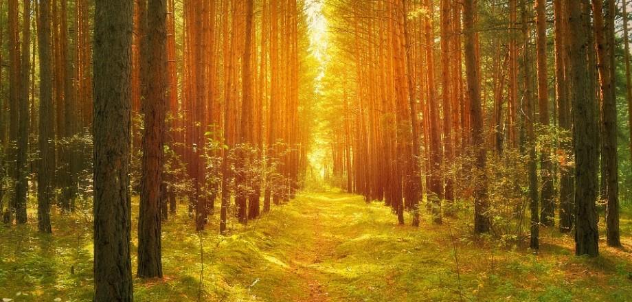 Naturreservat & Kulturspår
