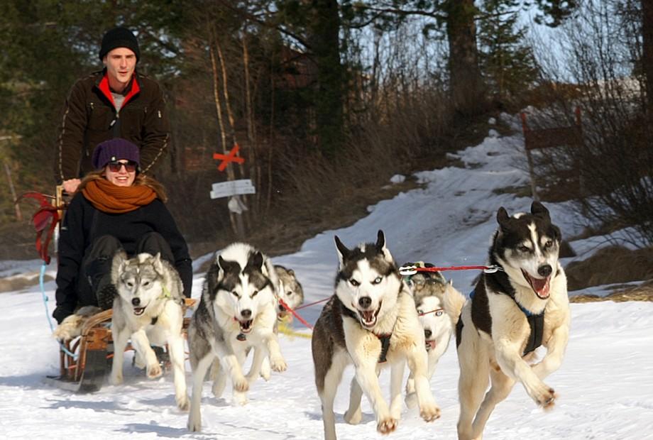 Lapland Experience